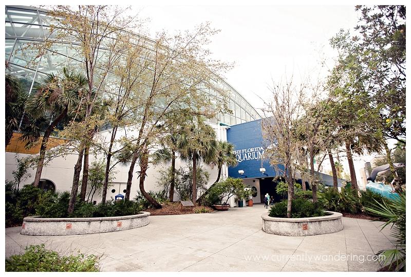 Tampa Aquarium Florida_001