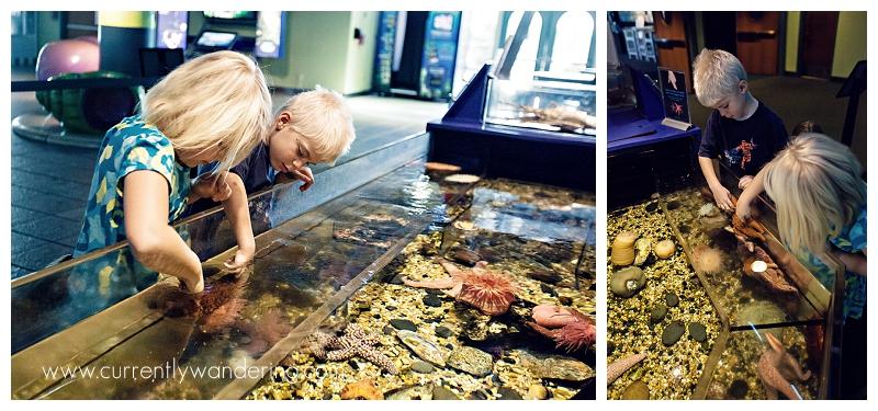 Tampa Aquarium Florida_003