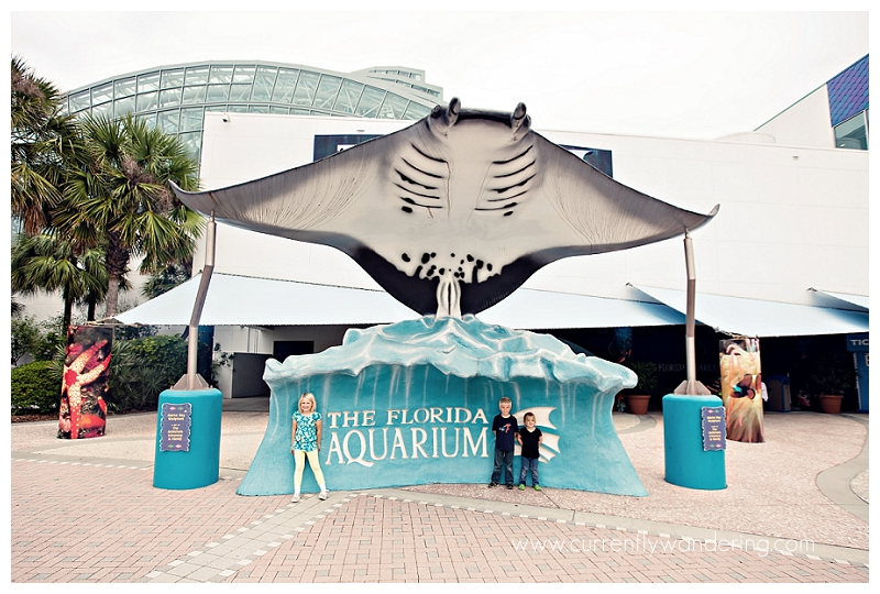 The Florida Aquarium In Downtown Tampa Currently Wandering