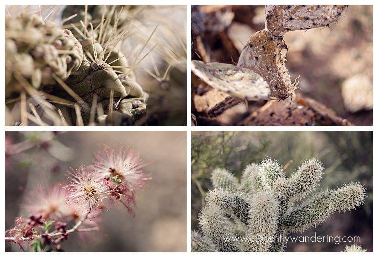 Saguaro National Park_003