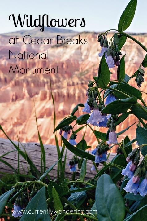 Wildflowers at Cedar Breaks National Monument. One of Utah