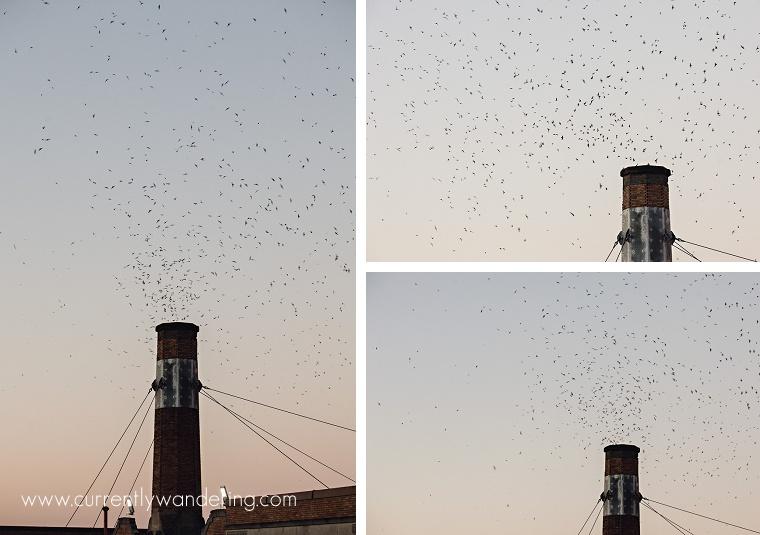 Swift Birds Portland_18