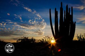 Organ Pipe NM_11