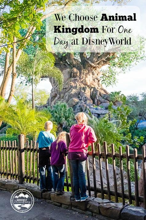 One Day Visit to Walt Disney World